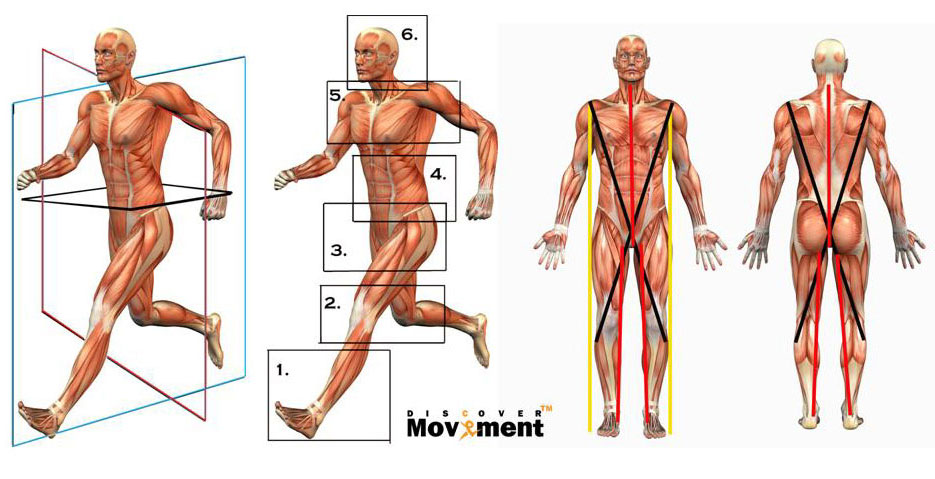 Muscle person in movement